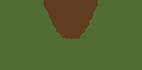 Çam Fıstığı , Çam kozalağı , Dolmalık fıstık , Pinenut ,Pinoli